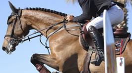 Pflege und Fütterung von Sportpferden